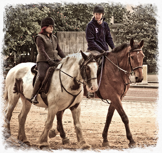 home_horse_pic10